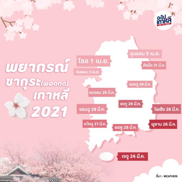 ปฏิทิน ซากุระ เกาหลี 2021